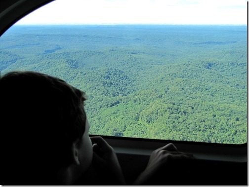 Papua Forest from the Air